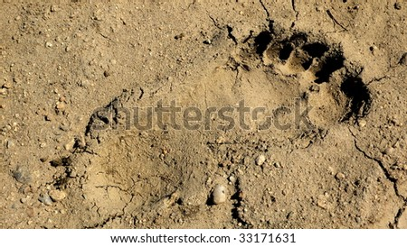Footprint of a naked human foot in the sand (left)