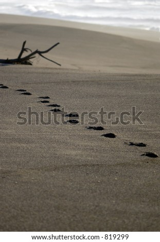 footprints cross diagonally across a beach of freshly exposed sand by the water's edge - stock photo