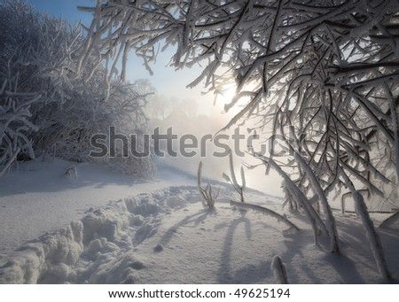 Footprints in deep snow among the bushes on a frosty mist