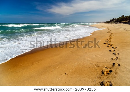 Footprints in the sand beach, Long road in dune - stock photo