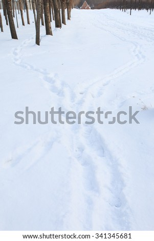 Footprints in the snow forest - stock photo