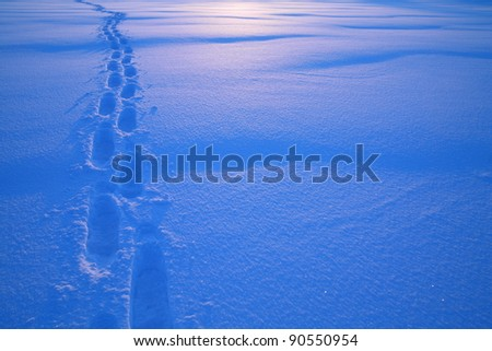Footprints in the snow Tracks in the snow............ - stock photo