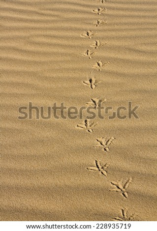 Footprints  of a bird in the sand on the beach - stock photo