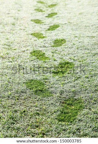 Footprints over the grass with dew in the early morning at golf course - stock photo