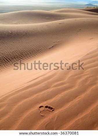 Footstep on the arid sand dunes of the Kalahari desert in Namibia, Africa - stock photo