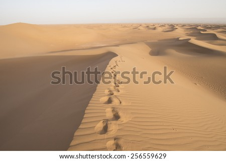 Footsteps in the sand in the Sahara desert in Erg Chegaga in Morocco in Morocco in the spring during a hot sunny day. - stock photo