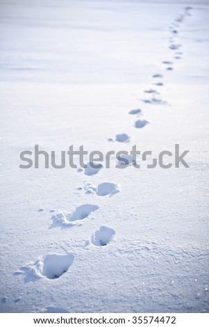 footsteps in the snow - stock photo