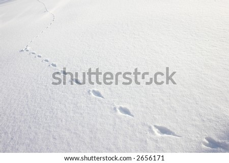 footsteps of a rabbit - stock photo