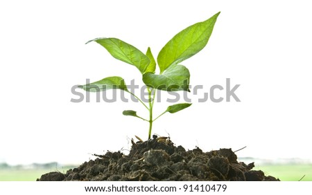 For each tree planted will survive global warming - stock photo