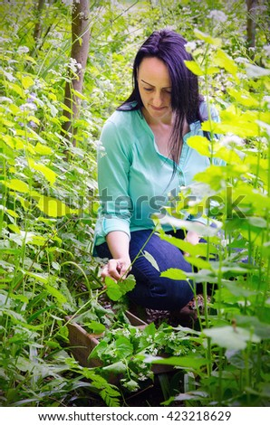 foraging for wild food. Portrait of a woman on a woodland path picking the invasive garlic mustard, Alliaria petiolata herb.