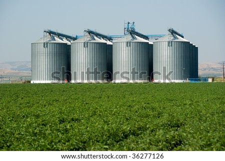 foreground green field in background four Silos metal - stock photo