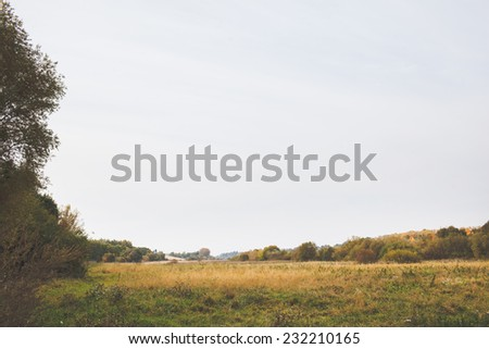 forest - stock photo