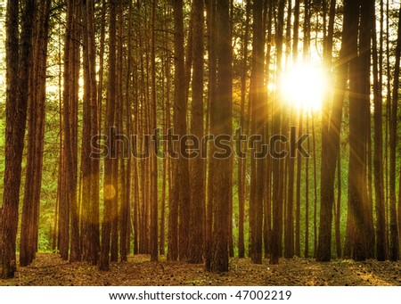 Forest. A coniferous forest in the East Europe. Ukraine. - stock photo