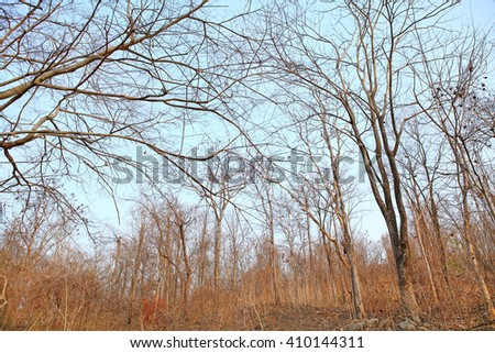 Forest after a bushfire - stock photo