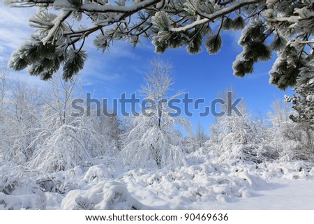 Forest after snowfall in Sleepy Hollow State Park, Michigan. - stock photo