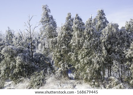 Forest after the ice storm - stock photo