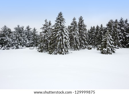Forest after the snowstorm. Beautiful winter day. - stock photo