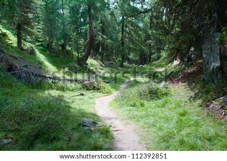 Forest - Aletschwald, Switzerland - stock photo