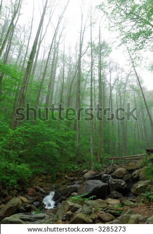 forest  Amicalola water fall - stock photo