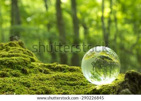 Forest and a transparent globe - stock photo