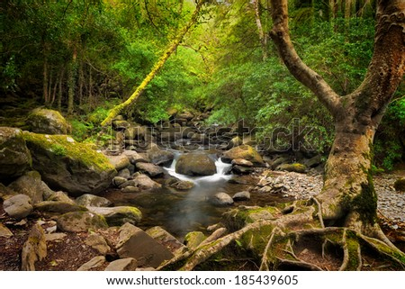 Forest and creek near Torc Waterfall, Killarney National Park, County Kerry, Ireland. - stock photo