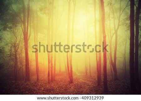 forest and hiking trail in spring fog