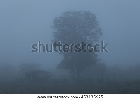 forest and huts in a misty morning,Thailand - stock photo