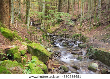 Forest and mountain creek in the national park of Foreste Casentinesi, Tuscany - Italy. - stock photo