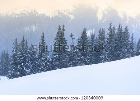 Forest and mountain in  the winter time. Natural winter landscape - stock photo