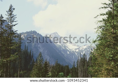 Forest and Mountain summit