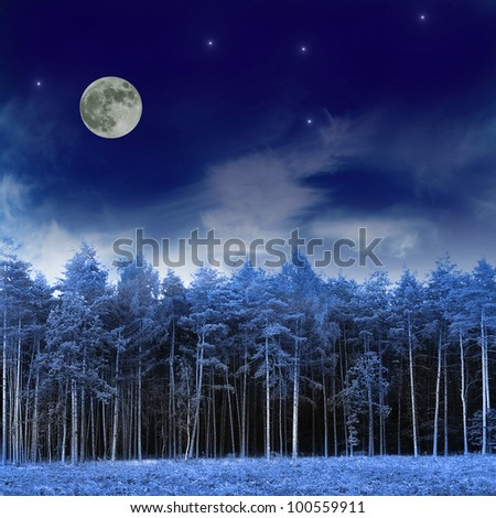Forest and night sky - stock photo