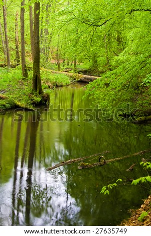 forest and river in spring