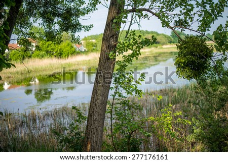 Forest and rivers - stock photo