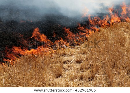 Forest and steppe fires dry completely destroy the fields and steppes during a severe drought. Disaster brings regular damage to nature and economy of region. Lights field with the harvest of wheat
