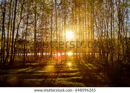 forest and sunset