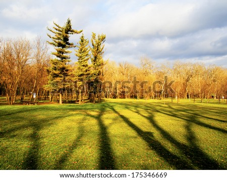 Forest and tree shadow on Ada Ciganlija, park in Belgrade, Serbia - stock photo