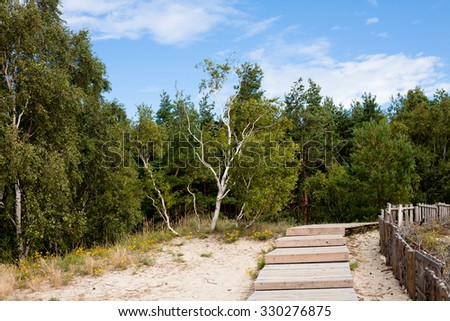 Forest and wooden road on a sands in summer day