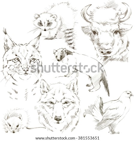 Forest Animal Pencil Sketch Set Bison Stock Illustration 381553651