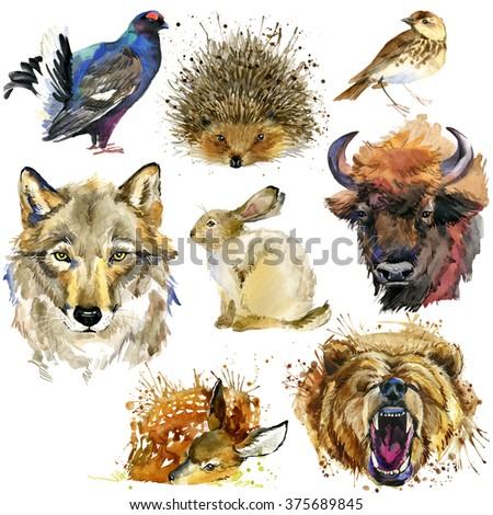 Forest animals set. Watercolor animal. hedgehog, thrush, wolf, hare, bison, deer, bear - stock photo