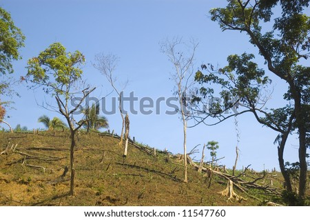 "Forest are usually destroyed in the Philippines to provide an area for planting.  After a few planting seasons and the soil nutrients had been depleted, ""kaingeros"" leave the land."
