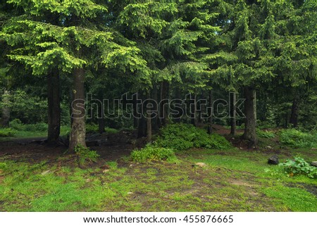 Forest as a background. Beautiful natural background in the summer time - stock photo