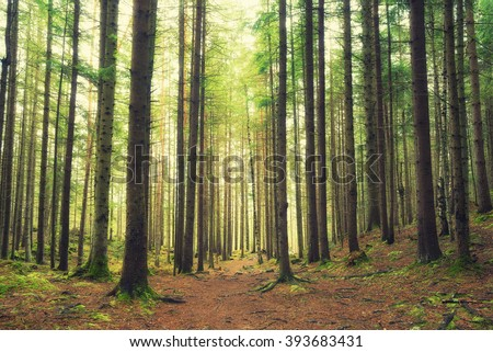 Forest as a background. Beautiful natural landscape in the spring time - stock photo