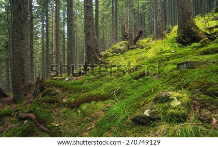 Forest as a background. Natural summer landscape - stock photo
