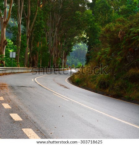 Forest Asphalt Road in Portugal after Rain