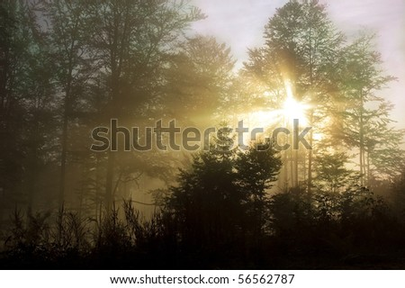 Forest at dawn with the sun shining through the trees. - stock photo