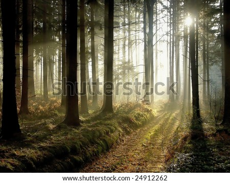 Forest at dusk - stock photo