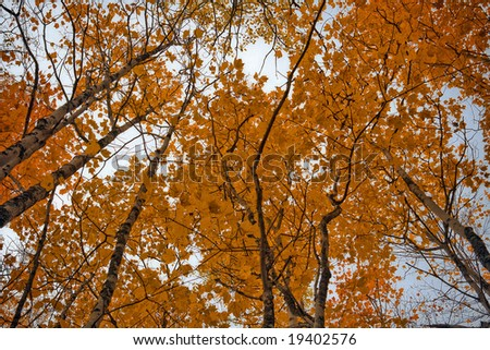 Forest at fall, focus on the top of the trees - stock photo