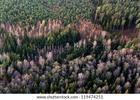 Forest at late autumn, aerial view, Lithuania - stock photo