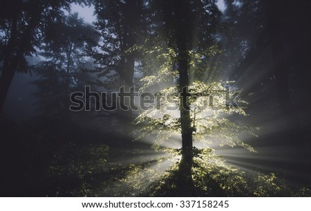 forest at night with mysterious light - stock photo