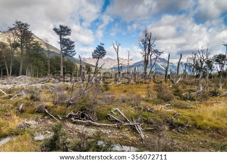 Forest at Tierra del Fuego, Argentina